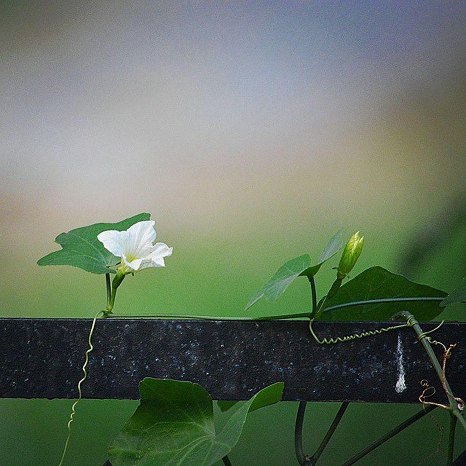 Green Diwali Gagans_photography Diwali2014 Gagans_photography Indianpictures