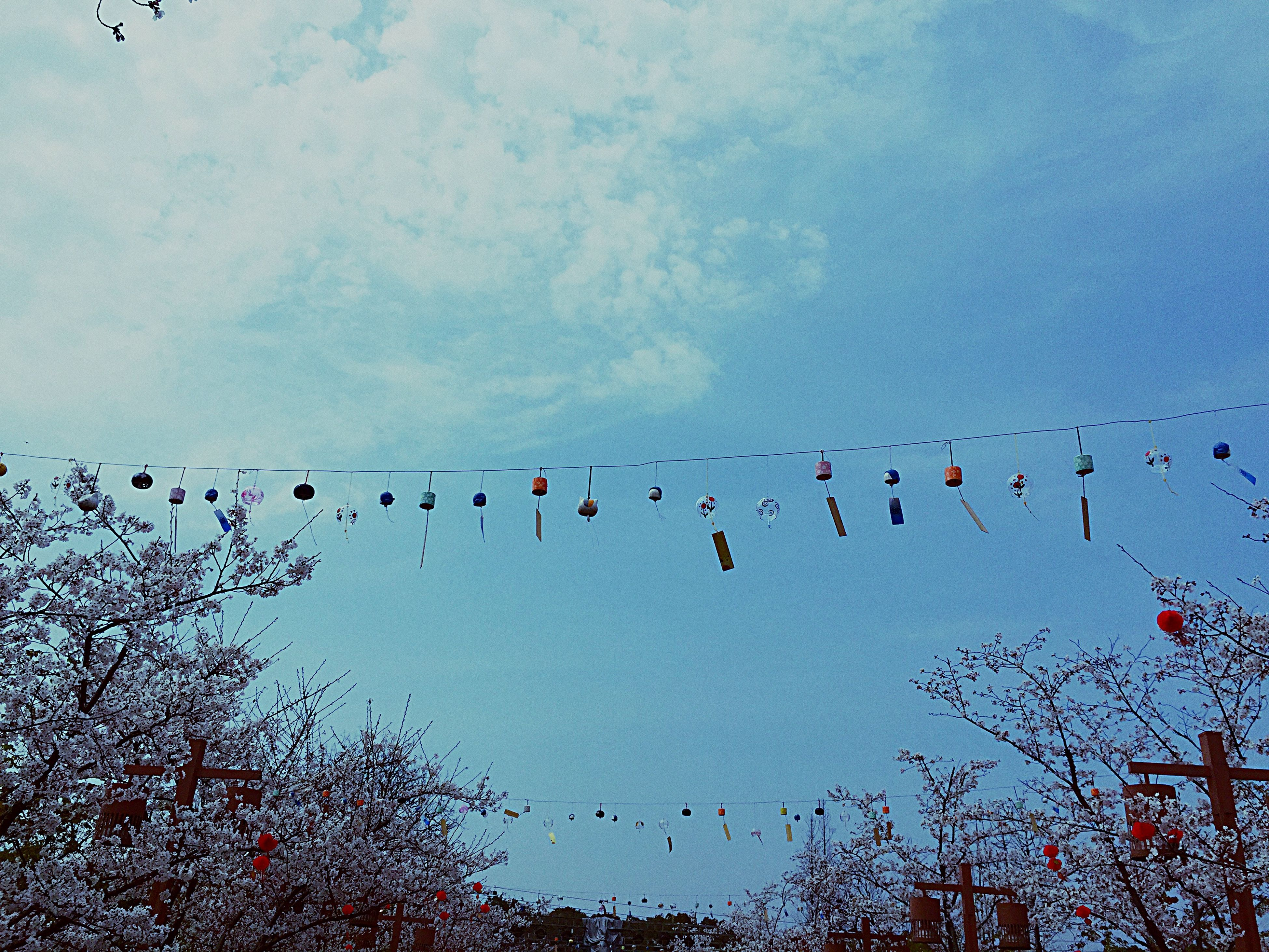 flying, bird, flock of birds, low angle view, animal themes, animals in the wild, wildlife, sky, mid-air, nature, silhouette, tree, beauty in nature, cloud - sky, outdoors, blue, freedom, medium group of animals, no people