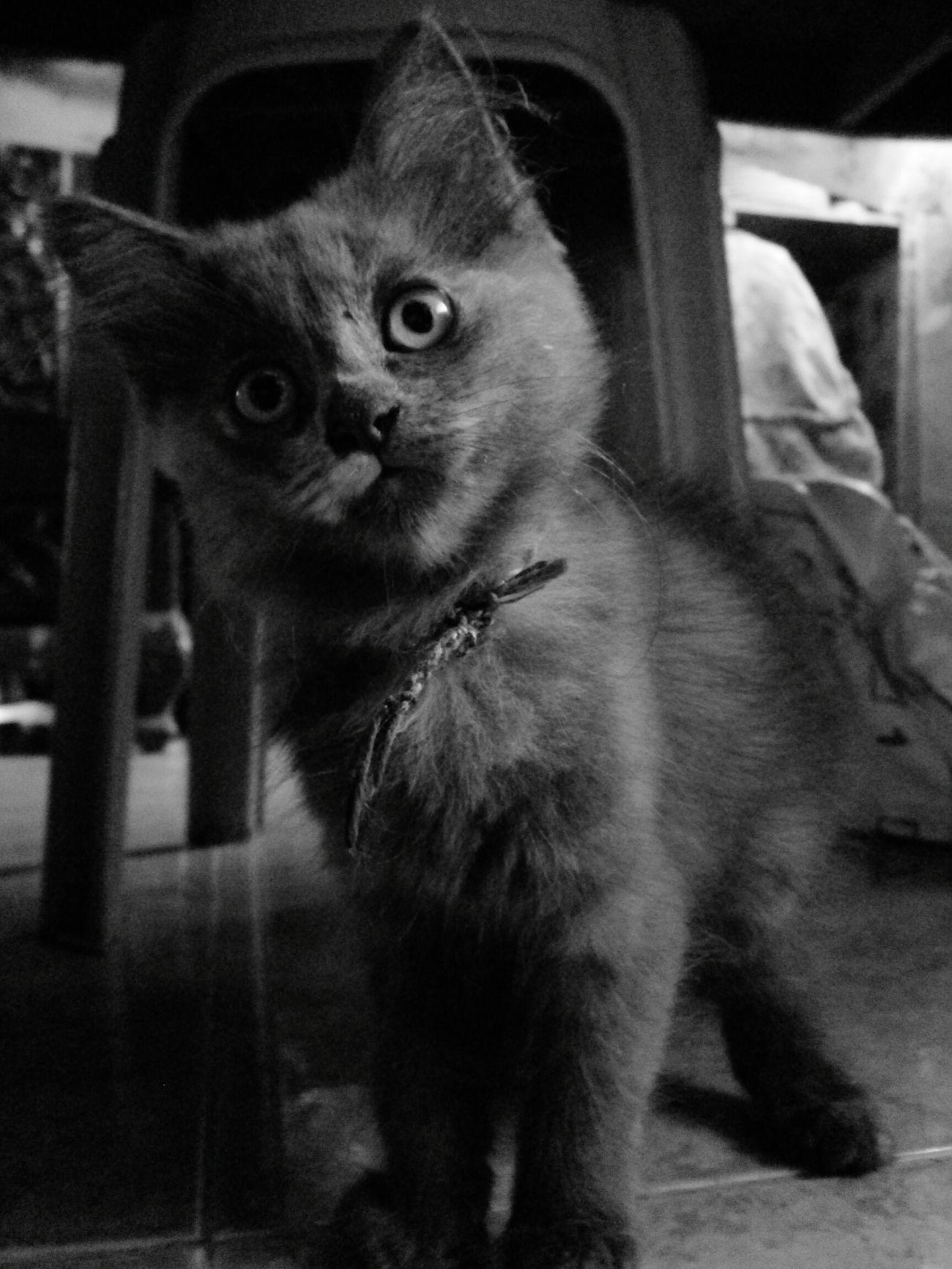 EyeemPhilippines PhonePhotography Petloverslife Instagramcats EyeEmCatlovers Catportrait