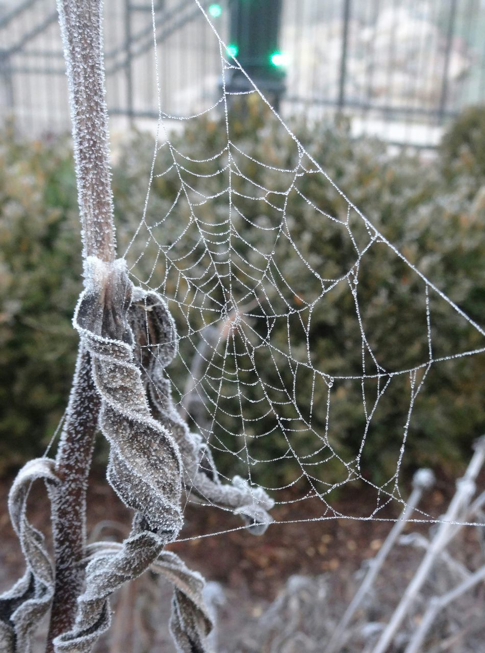 focus on foreground, spider web, day, close-up, outdoors, no people, nature, trapped, web, fragility, complexity, growth