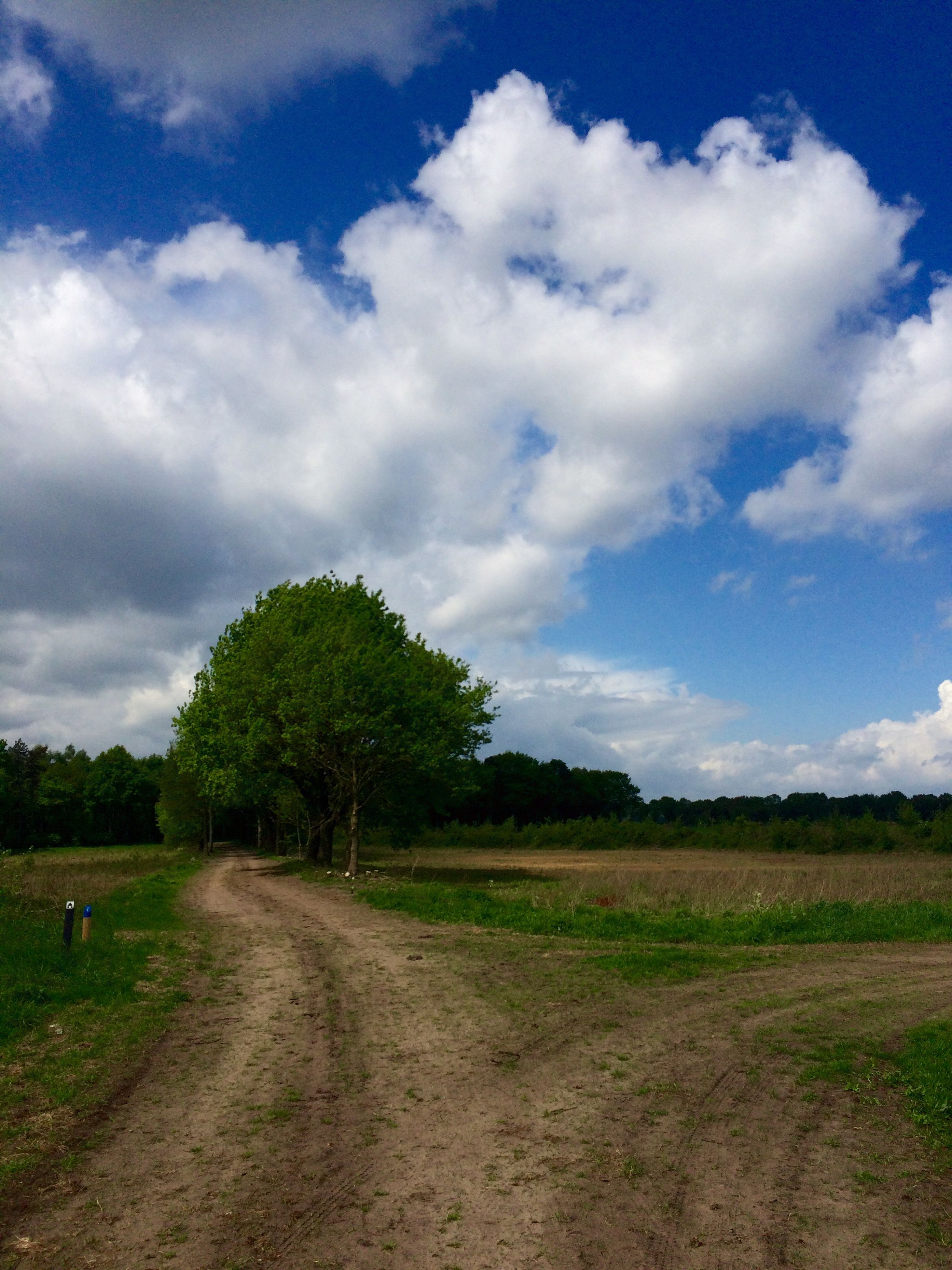 sky, tree, cloud - sky, tranquility, tranquil scene, landscape, cloud, grass, nature, the way forward, field, scenics, cloudy, growth, beauty in nature, dirt road, day, green color, non-urban scene, outdoors