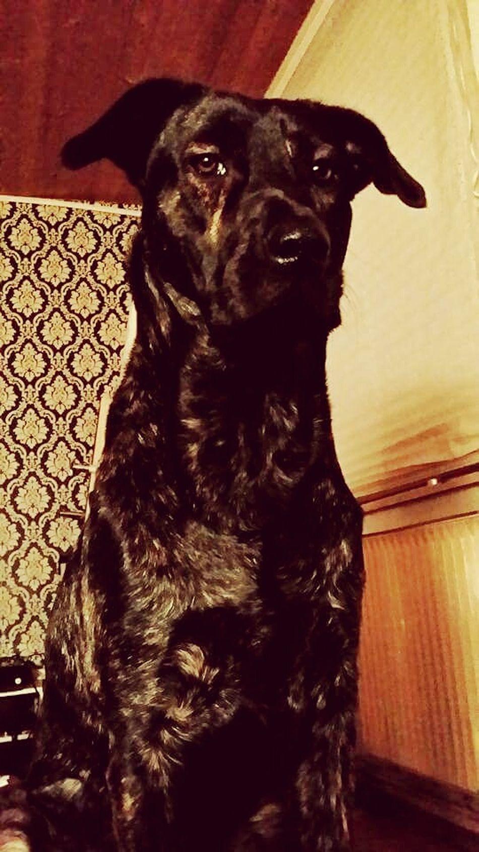 Dog Love♡ MyBabyBoy Bestfriend❤ Mybodyguard MeinLeben! EndlessLove Pets
