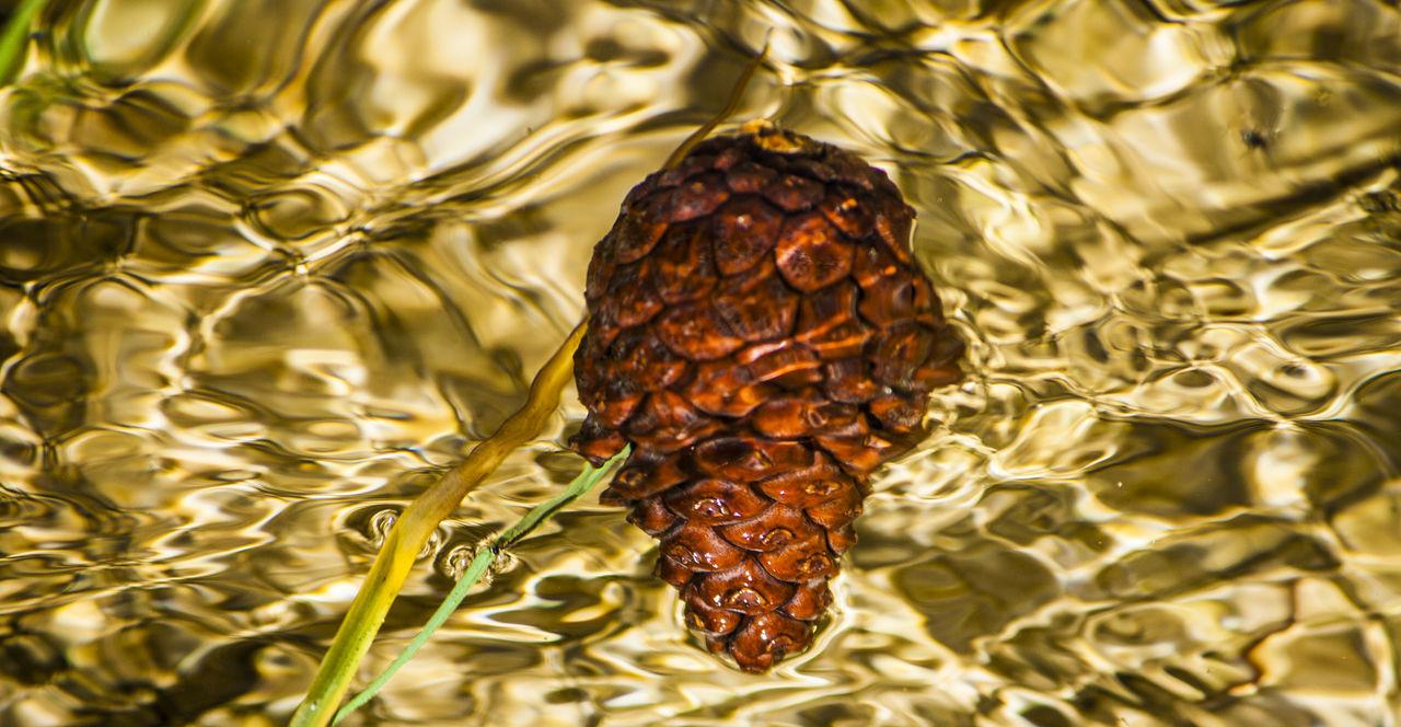 Embalse de La Bolera y Arroyo de Guazalamanco Beauty In Nature Cazorla Cazorla Jaen Cazorlaseguraylasvillas Embalse De La Bolera Jaen Province Nature No People Pozo Alcón