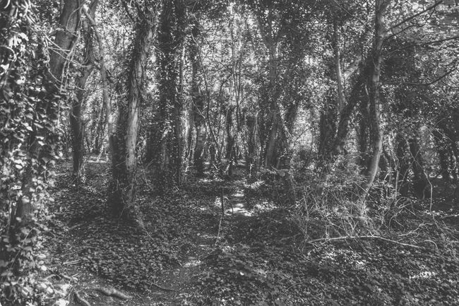 Drama in the woods 👻 Monoart Monochrome Woods IPhoneography Streamzoofamily Nature EyeEm Nature Lover