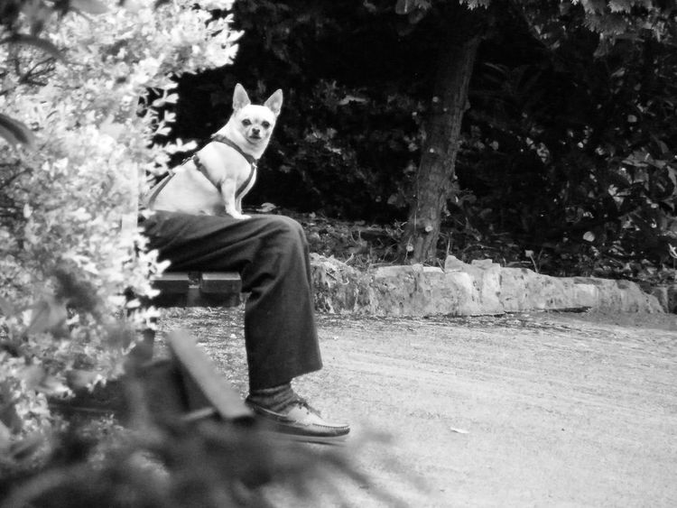 Animal Themes Day Dog Domestic Animals Full Length Looking At Camera Looking At Me Low Section Mammal Man's Best Friend No People On The Watch One Animal Outdoors Pets Sitting Pet Portraits
