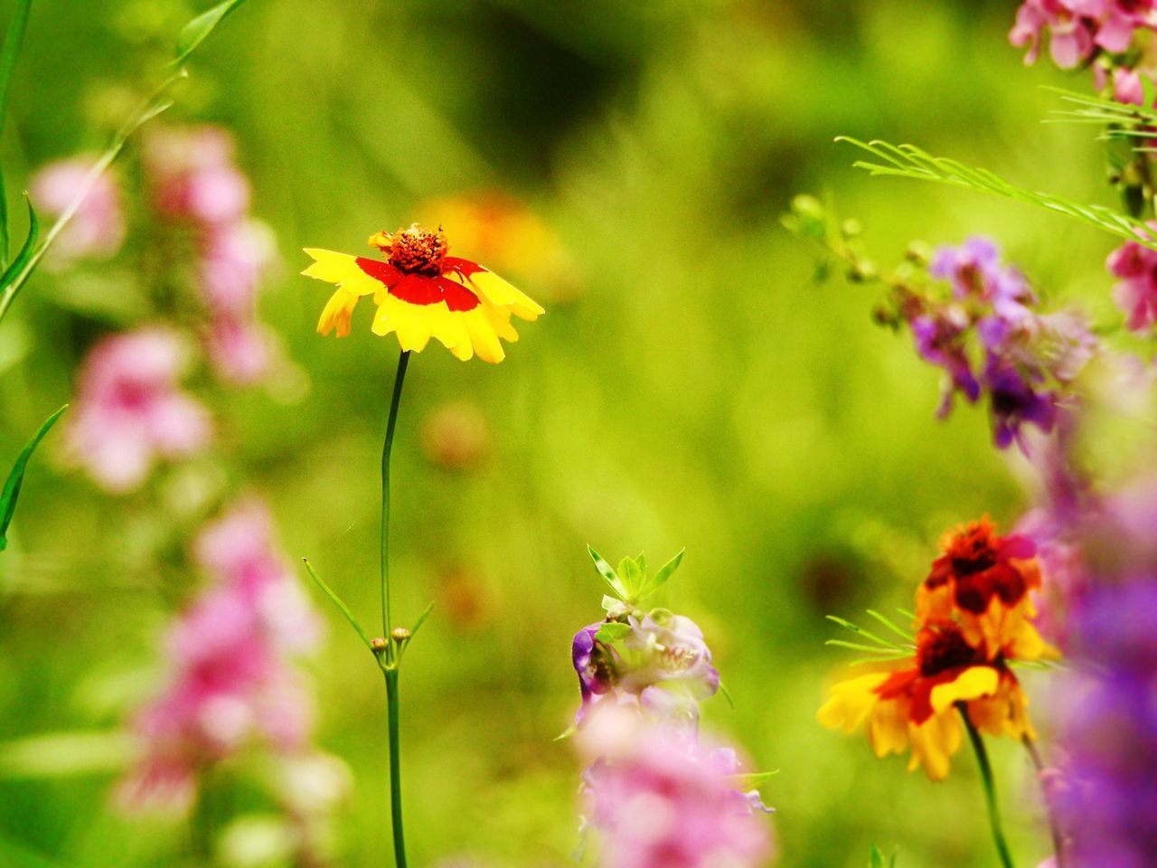 flower, fragility, growth, plant, yellow, petal, beauty in nature, nature, day, insect, freshness, focus on foreground, no people, close-up, flower head, animal themes, outdoors