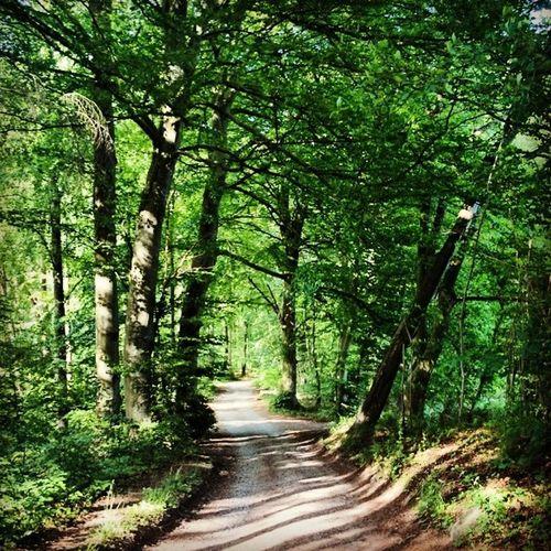 Moesgaard Treer Woods Træer skovnatur