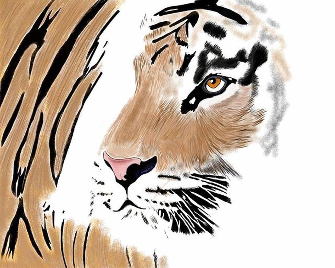 one animal, tiger, animal themes, mammal, animal markings, feline, pets, no people, animal wildlife, zebra, domestic animals, close-up, white background, leopard, day