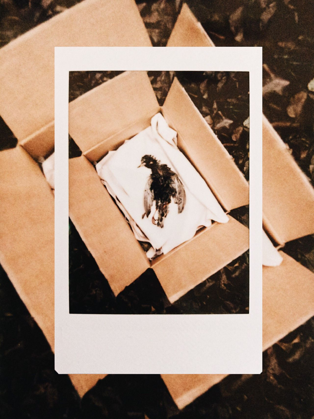 Day 25. Instant Photo A Day Paper Photograph Backgrounds No People Close-up Indoors  Bird Nature Collection Nature Death Simplicity Tranquility Film Photography Film The Week On EyeEm