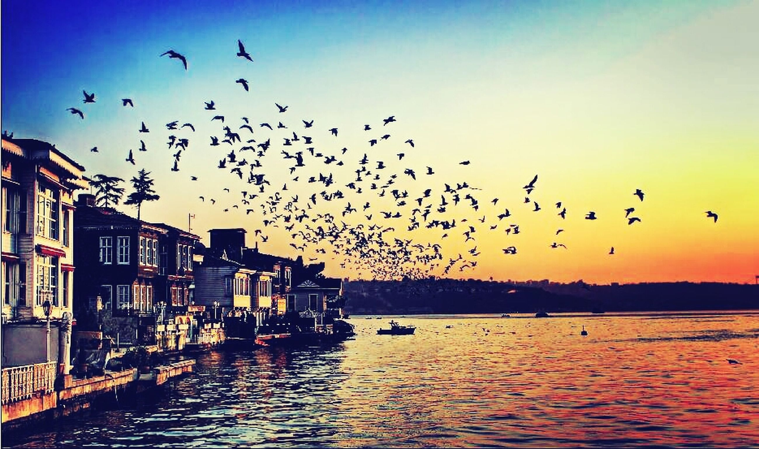 bird, flying, animal themes, animals in the wild, wildlife, flock of birds, water, sunset, mid-air, sky, built structure, medium group of animals, building exterior, architecture, waterfront, nature, river, spread wings, silhouette
