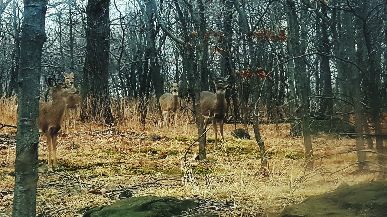 Deers Tree Winter Deers Nature Beauty Peace Animals In The Wild Day Deers venados