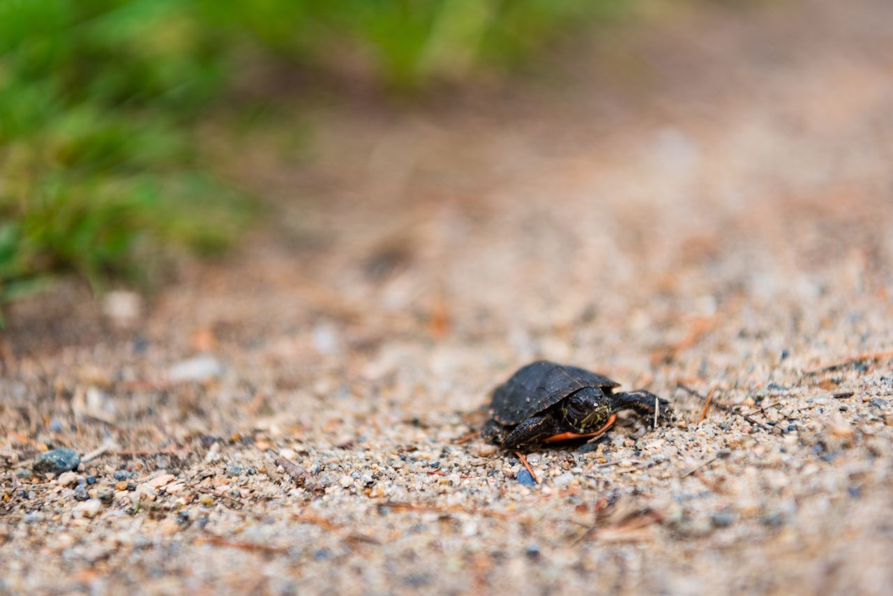 animals in the wild, animal themes, one animal, day, selective focus, animal wildlife, outdoors, insect, no people, nature, close-up