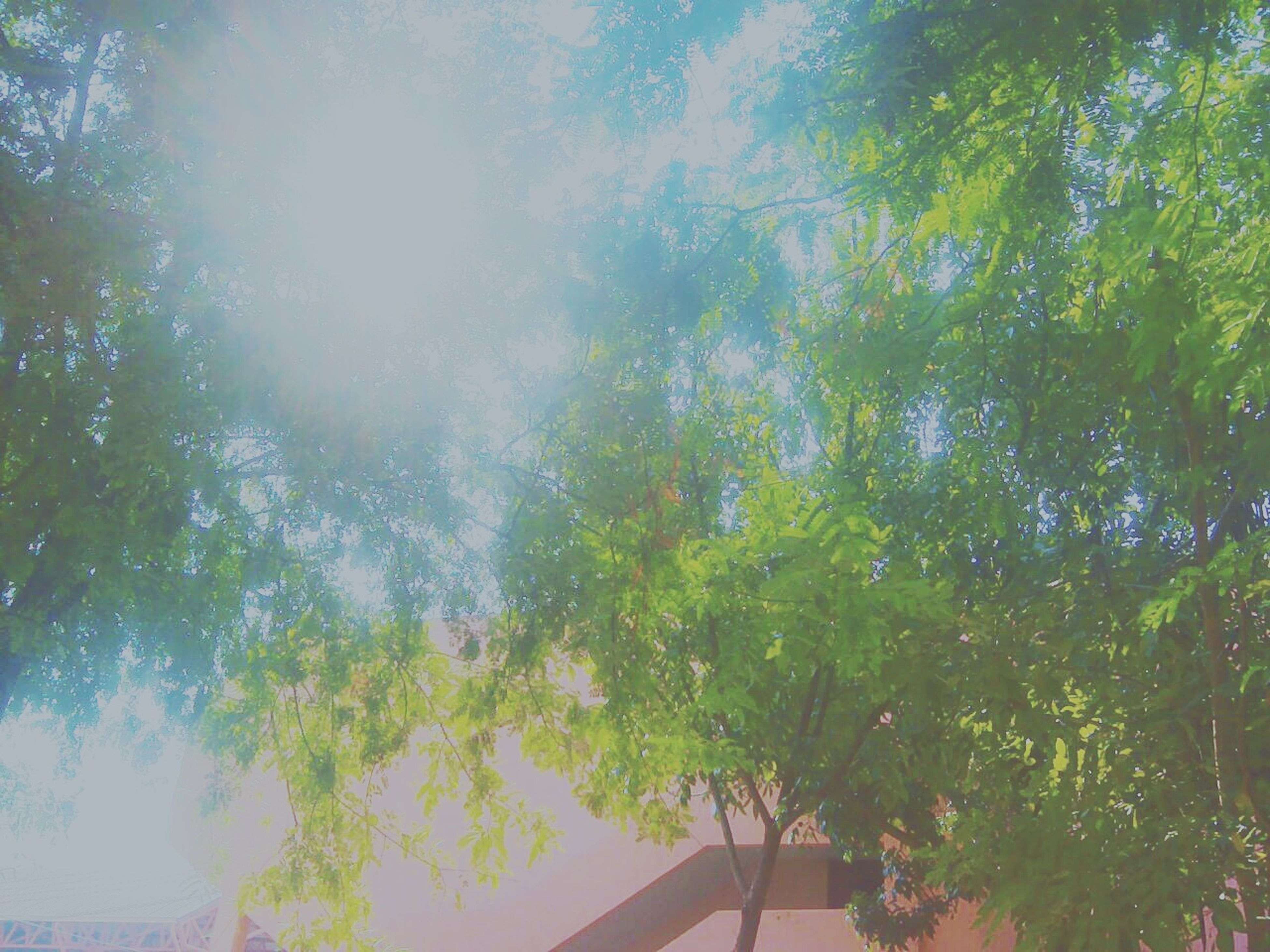 tree, low angle view, growth, sunlight, branch, sunbeam, nature, tranquility, sun, beauty in nature, sky, day, sunny, green color, lens flare, outdoors, no people, tranquil scene, scenics, tree trunk