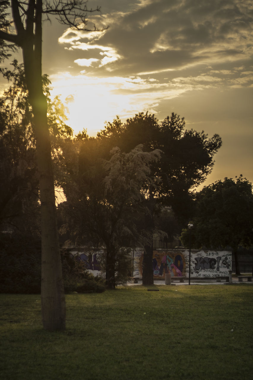 tree, grass, sky, nature, sunset, growth, sunlight, outdoors, no people, beauty in nature, day, soccer field