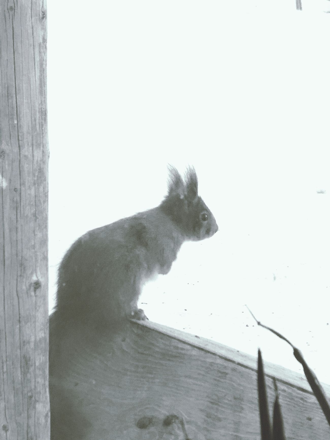 Squirrel Animals In The Wild Nature Cute♡ Morning