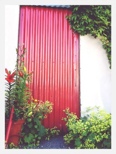 Red Door Taking Photos