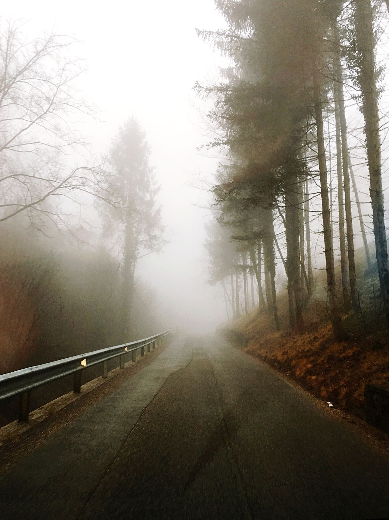 Tree Fog Nature The Way Forward Road Beauty In Nature Outdoors Winter Cold Temperature Winding Road Foggy Morning Foggy Alps Italy