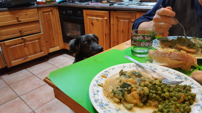 to eat is so hard, now 😂🐶❤ Dog Dogslife Dogs Of EyeEm Dog Love Dog Food Dinnertime Real Moments Havedinner Lovehim Love Food Foodlover Dog Life