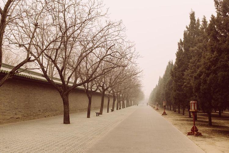 The Way Forward Tree Bare Tree Tranquility Winter Nature Traveling China. Travel Destinations China Beijing, China Travel Day Outdoors Tranquility ASIA China Photos Chinese Beijing Travelphotography Pekin Scenics