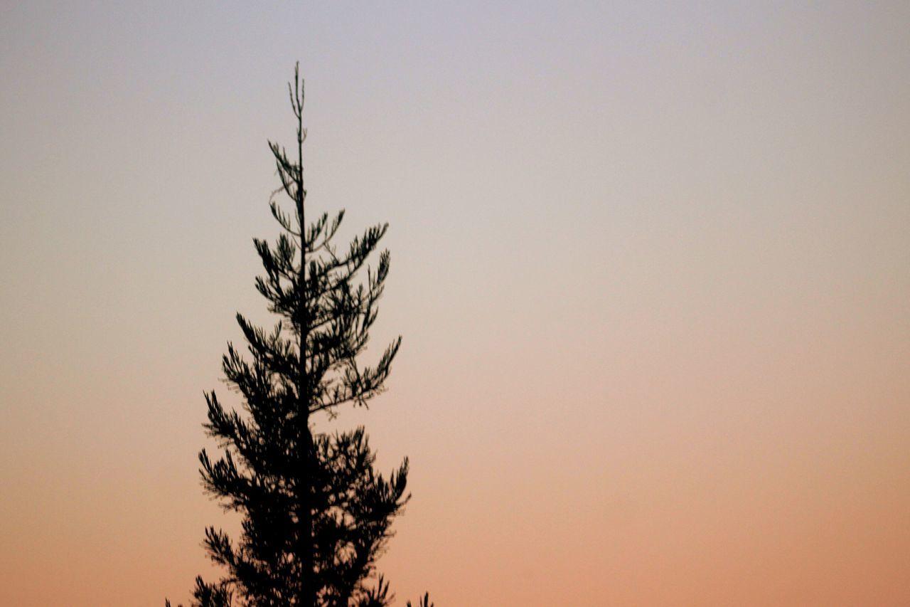 Trees Tree Sky W0rldphotography Orange By Motorola Violet By Motorola Check This Out Wallpaper Hello World Enjoying Life