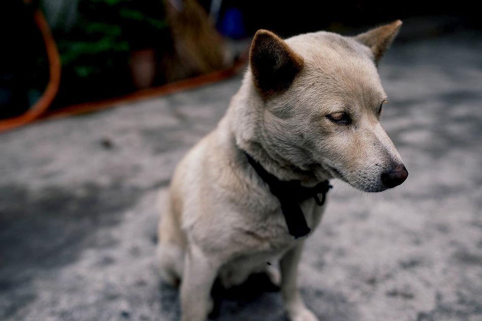 Beautiful stock photos of emotion, Animal Themes, Close-Up, Dog, Domestic Animals