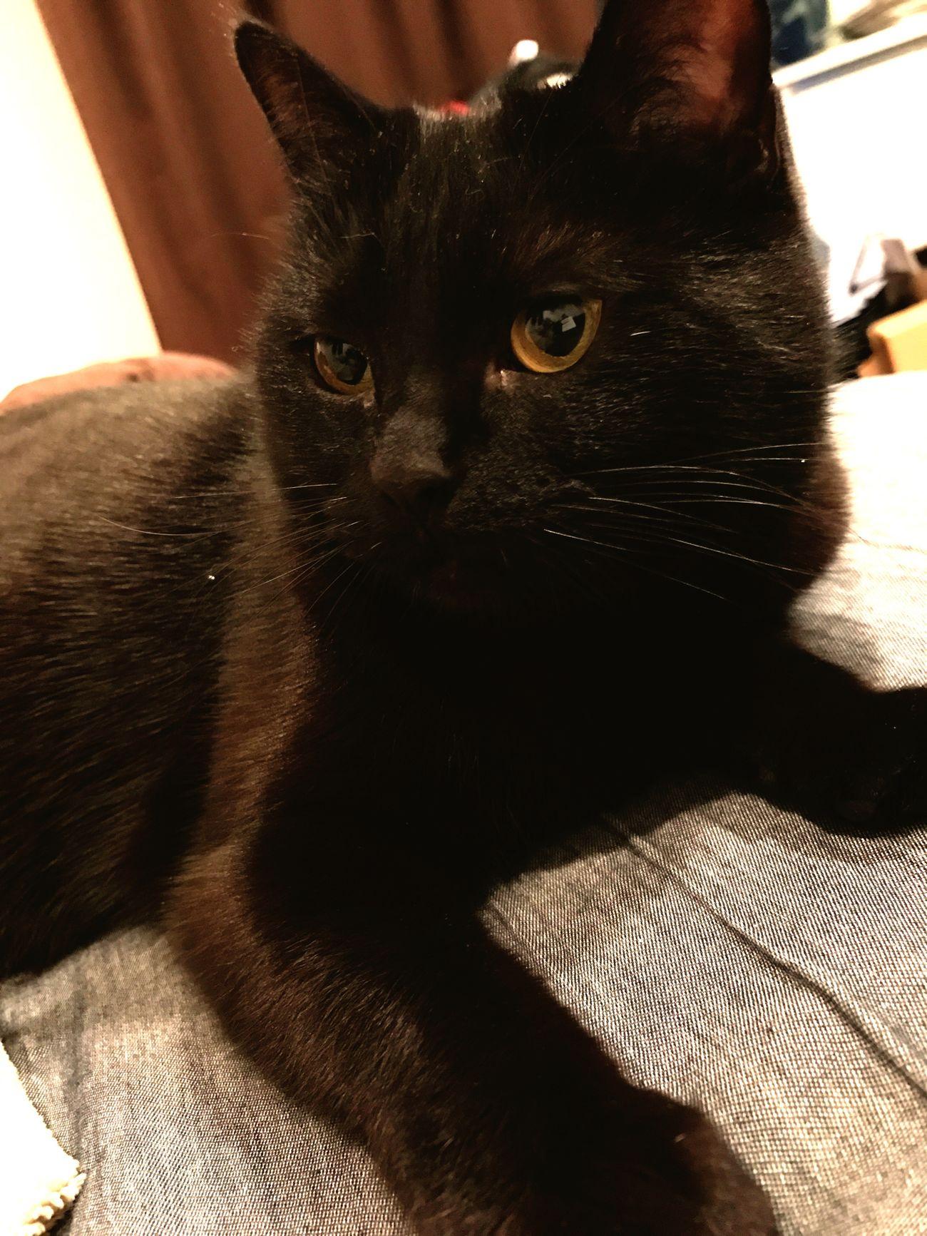 2ヶ月ぶりの再会。 Pets Cat Cats BLackCat Cat Lovers ねこ 黒猫 Cat♡