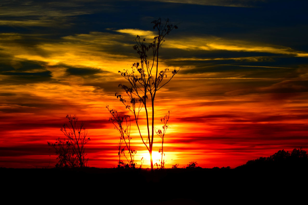 Low Angle View Of Silhouette Plants Against Dramatic Sky During Sunset