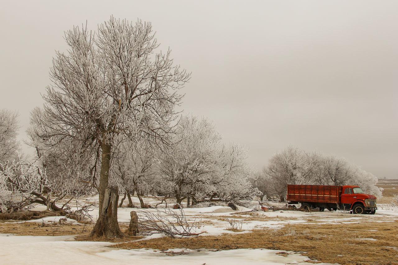 Beautiful stock photos of lkw, snow, winter, cold temperature, tree