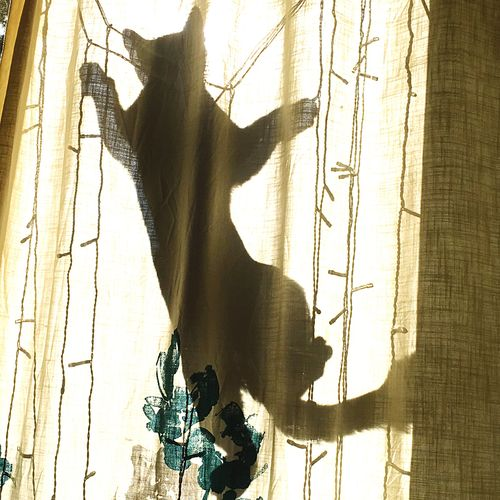 my crazy Kitty Cat Climbing behind my Curtain iphone6