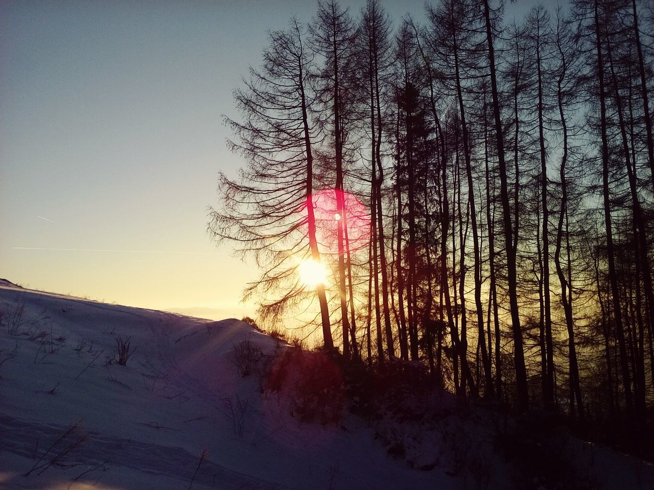 Winter Scenery Winter Sunset Beautiful Nature Bare Trees Group Of Trees Conifers Sunglare Golden