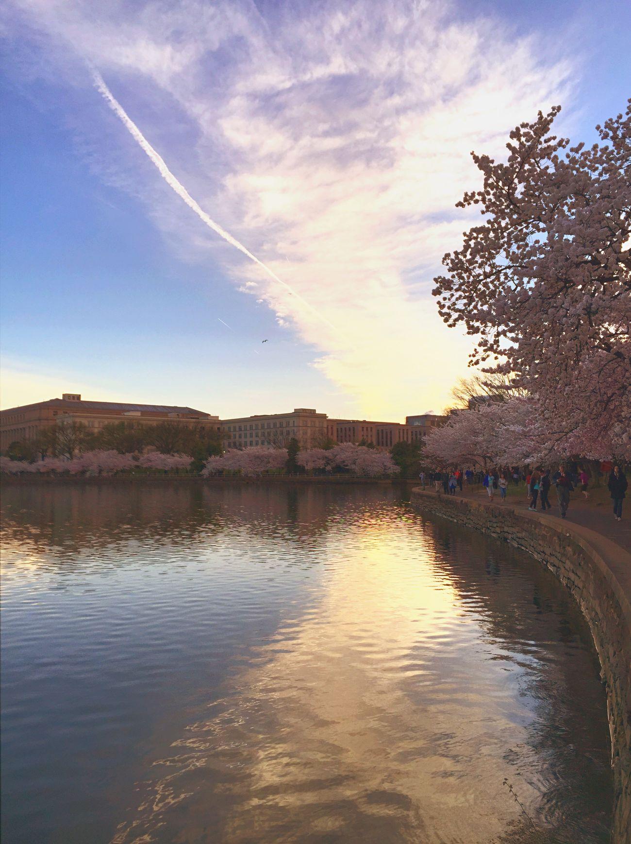 Pastel morning Tidal Basin Cherry Blossom Festival Cherry Blossoms Spring Flowers My Hometown Raised By Natives Washington DC