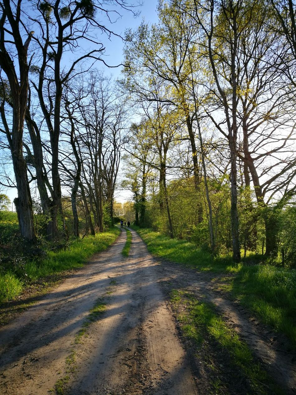 Trees spring country green Allier no people shadows evening light golden hour walk EyeEmNewHere
