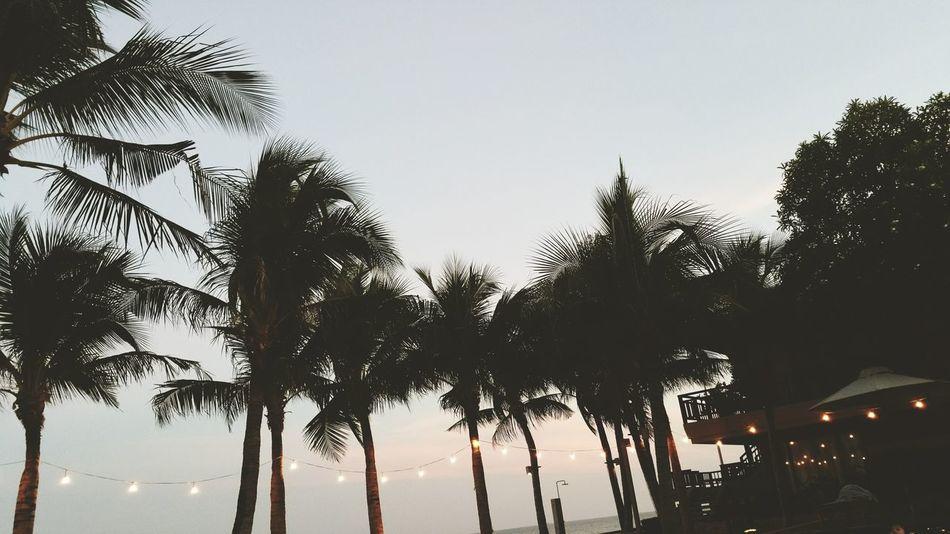 Palm Trees Chilling BeachHouse Hanginglights Outinthesun