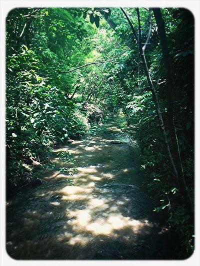 Landscape Nature Forest Nature Textures