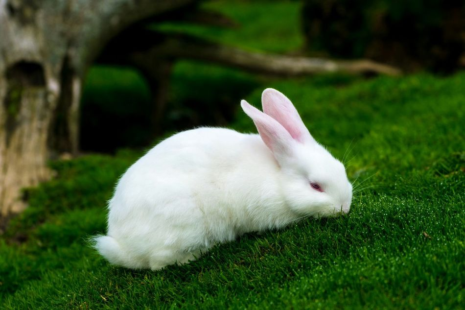 Beautiful stock photos of easter bunny, Animal Themes, Animals In The Wild, Beauty In Nature, Close-Up