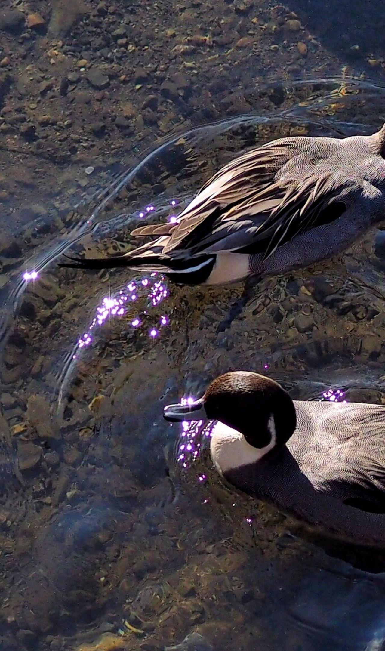 EyeEm Birds Bird Of Tokyo Birds Bird