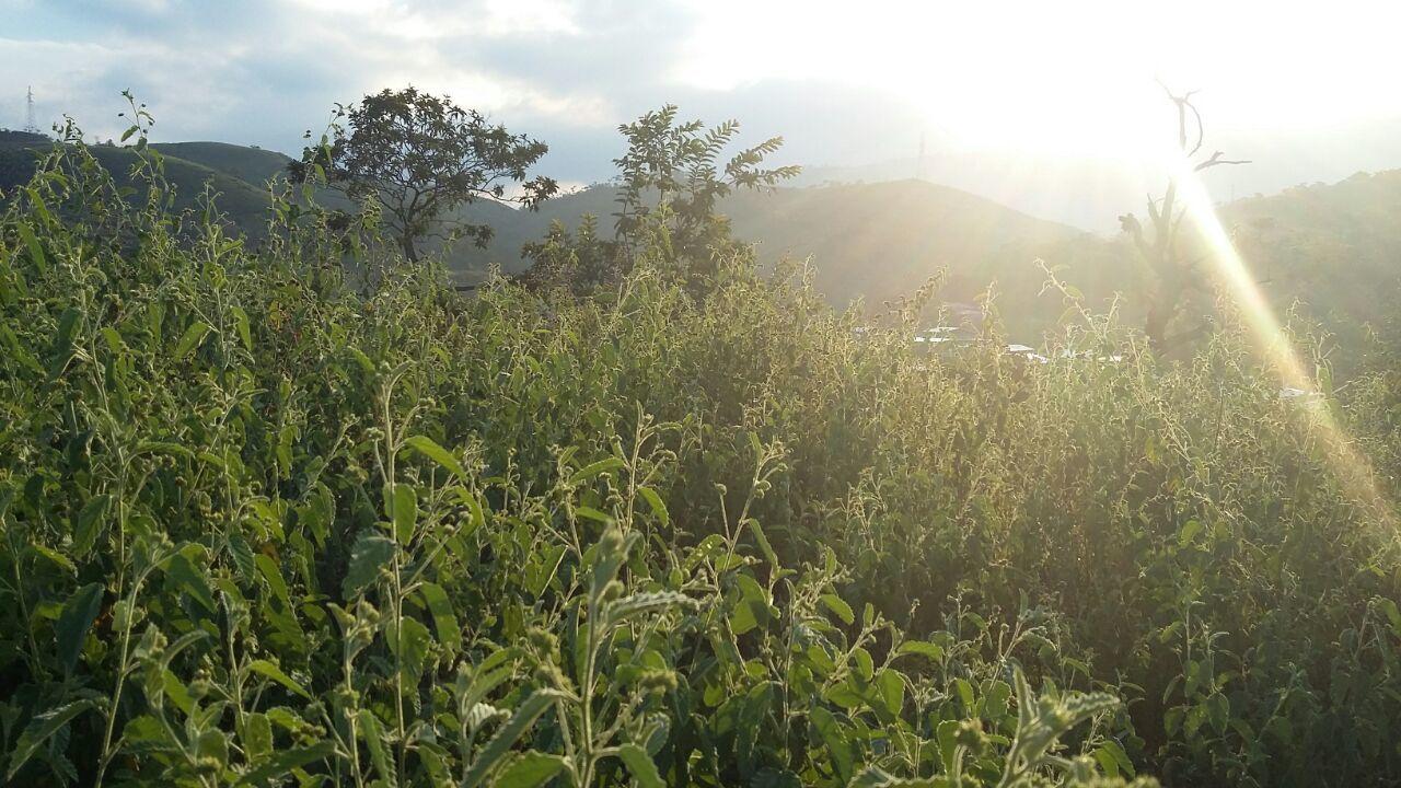 Colombia-cauca