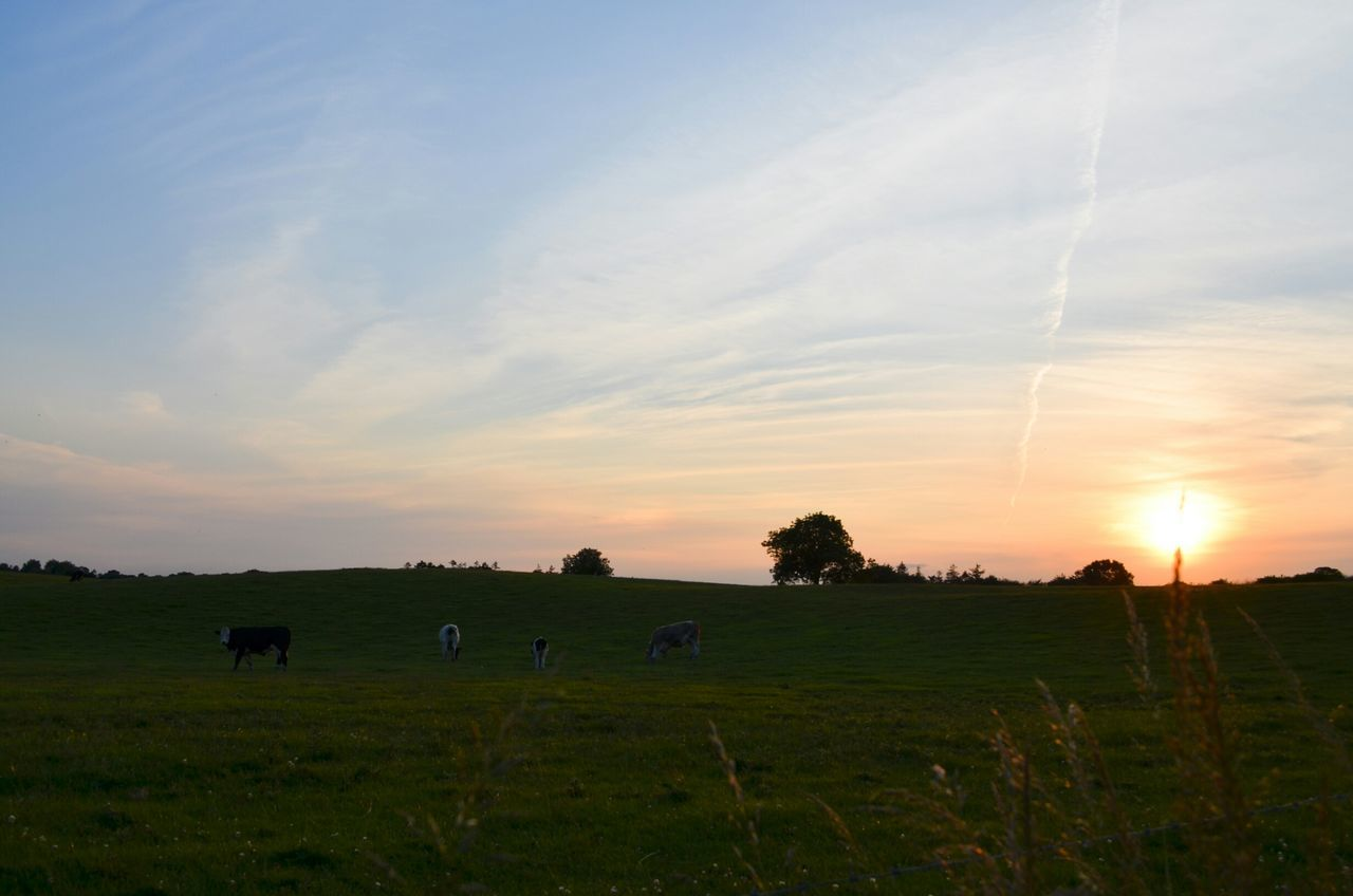 Sunset Nature Ireland Love Beautiful Sky Landscape Freedom Irlanda Tramonto