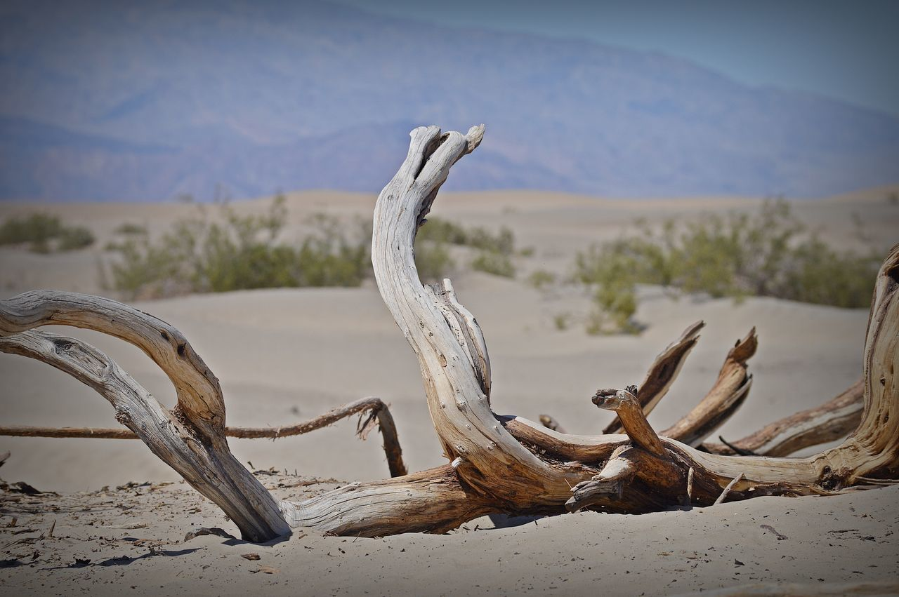 sand, nature, animal skull, beach, no people, outdoors, beauty in nature, day, scenics, close-up, arid climate, dead tree, sky