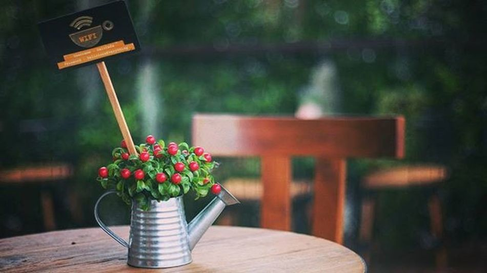 Free WiFi Tree Red Vase Chill Smile Funny Bokeh Picture Photo CameraMan Photographer Fujifilm Fujixe1 Fujithailand Xe1 Lens Manuallens Cannon Vintagelens Canonfd50mm Canonfd50mmf1_4 50mm F1_4 50mmlens Thailand bangkok city