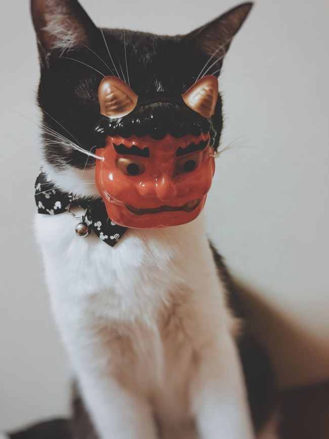 Cat Pets Animal Themes Portrait Mask Cute Eyem Best Shots Home IPhoneography Mobilephotography