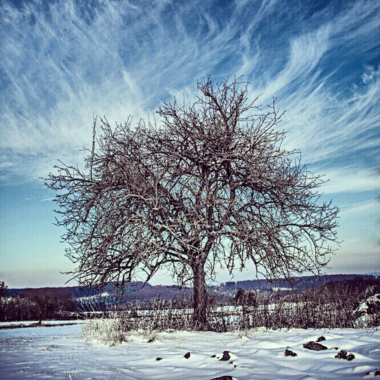 winter, snow, cold temperature, tree, nature, bare tree, beauty in nature, landscape, tranquility, tranquil scene, frozen, scenics, outdoors, branch, sky, no people, day