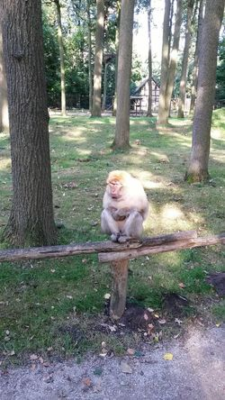 Monkey Animal Themes Outdoors Chilling In The Sun Zoo Zoo Animals  Münster Nordrhein-Westfalen Germany Outside Outside Photography Outdoor Photography My Year My View Finding New Frontiers The Secret Spaces EyeEm Diversity Resist