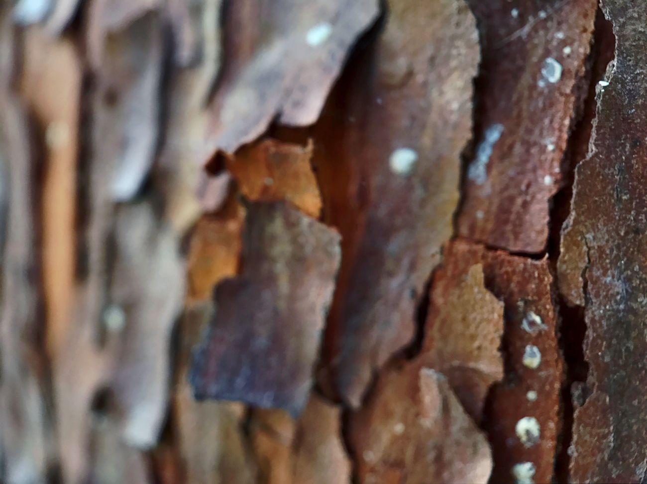 Koduckgirl Textured  Close-up Moment Lens Moment Macro Bark Texture