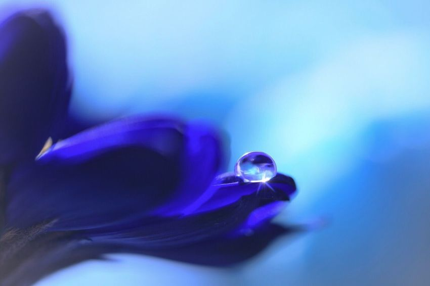 Flower Blue Fragility Petal Nature Beauty In Nature Close-up Flower Head Freshness No People Outdoors Day Macro