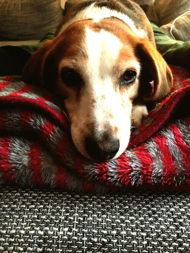 Dogish Dog First Eyeem Photo