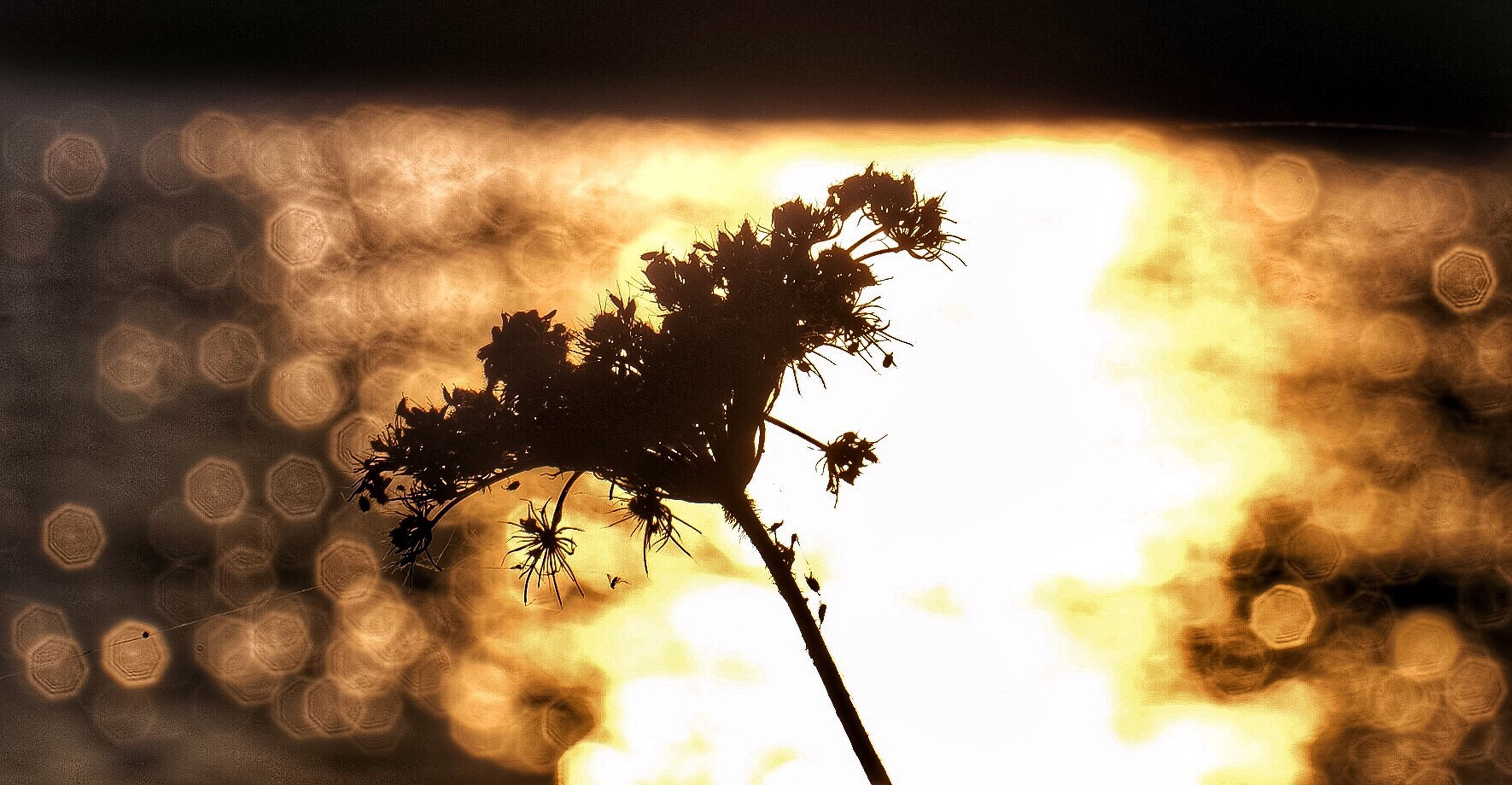 silhouette, sunset, tree, growth, close-up, focus on foreground, nature, beauty in nature, plant, back lit, sun, scenics, tranquility, outdoors, tranquil scene, sky, no people, atmospheric mood, majestic, uncultivated