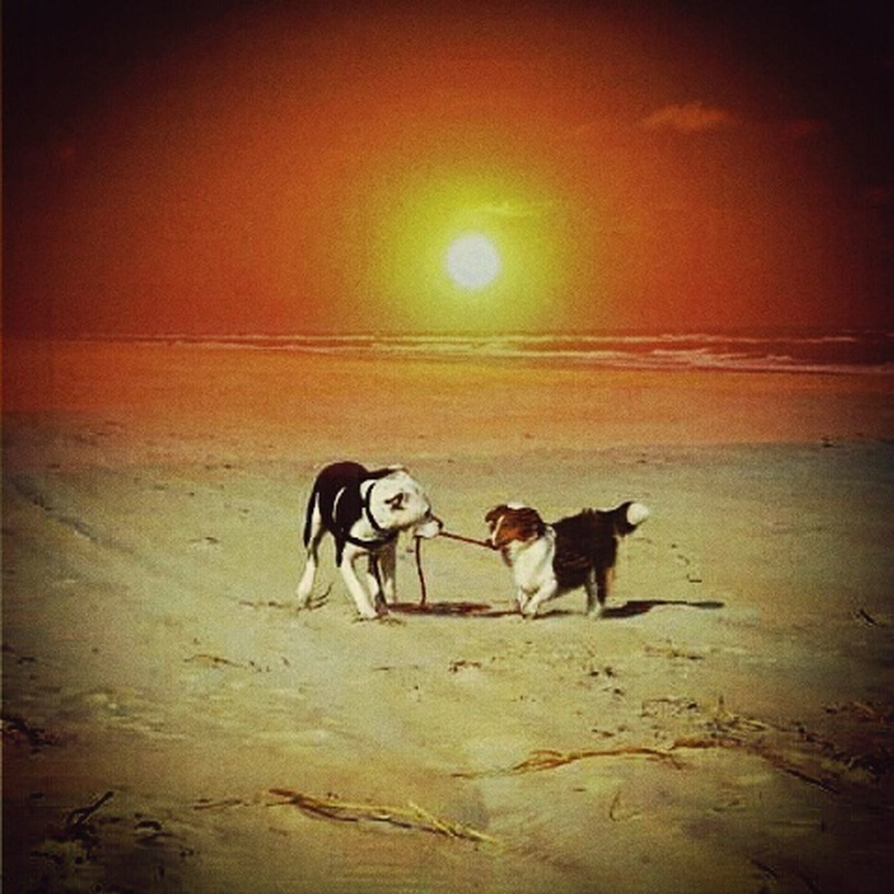 dog, animal themes, domestic animals, pets, mammal, two animals, no people, sunset, outdoors, nature, day, sky