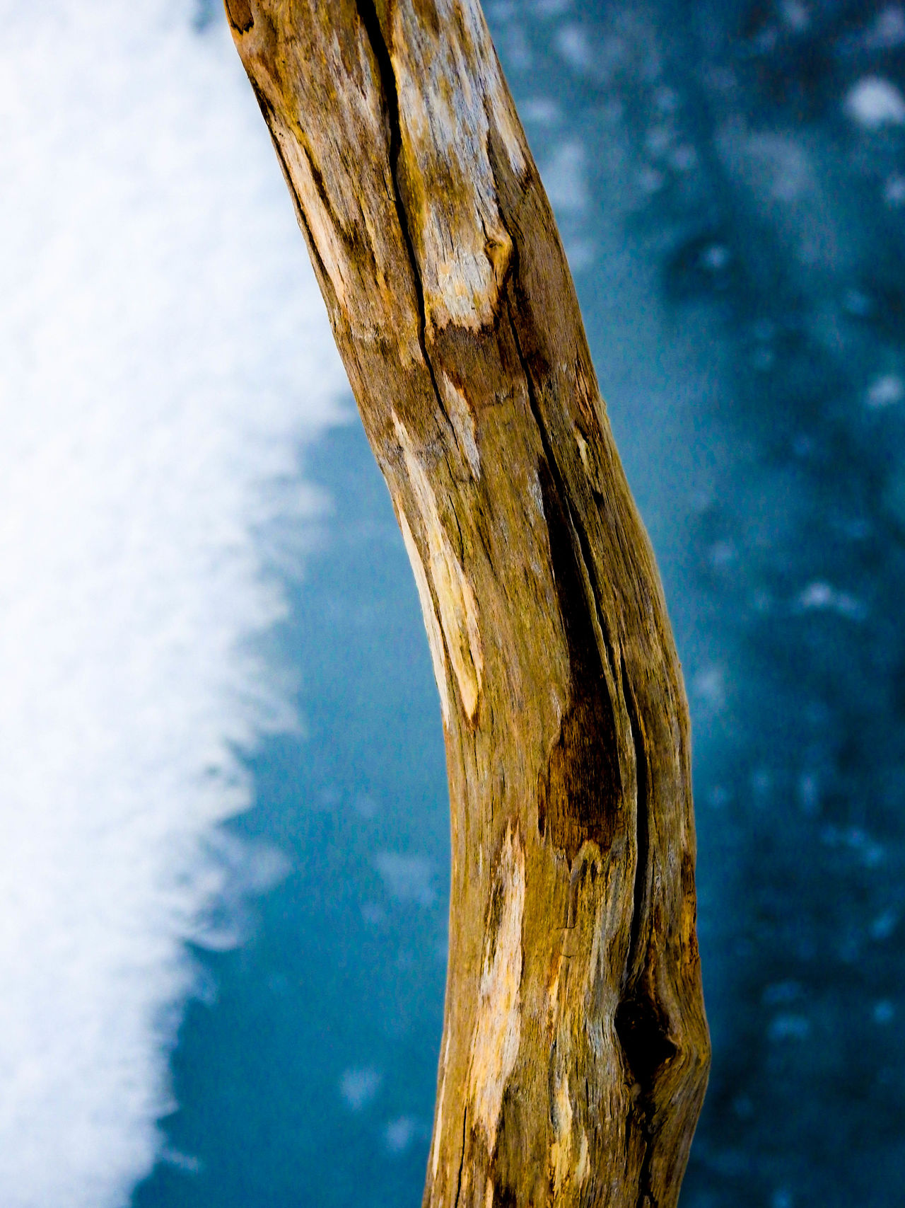 Blue Branch Brown Close-up Day Dead Tree Frost Ice Log Macro Macro Photography Nature No People Norway Outdoors Snow Stick Tree Wood Wooden Yellow