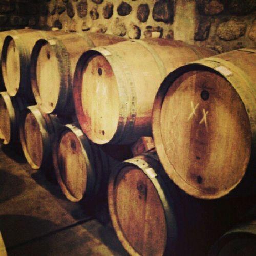 Wine Winery